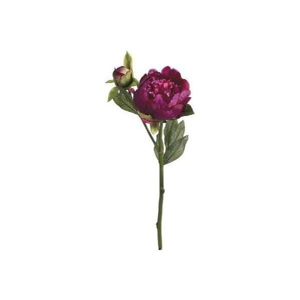Pastel rose anemone